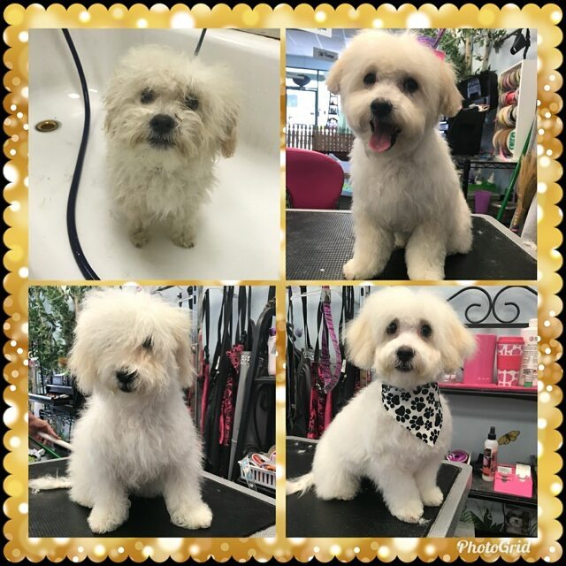grouping images from grooming