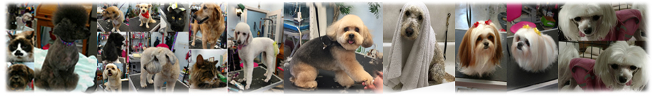Grooming images of Dogs and Cats Footer